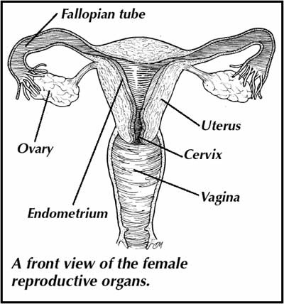 Female Reproductive System I Am So