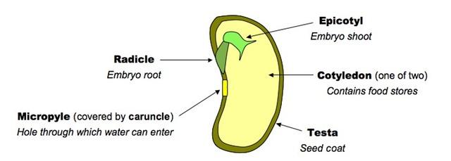 Biology Parts Plant Seeds Name